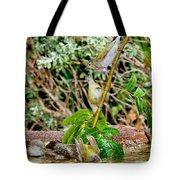 Tennessee Warblers Tote Bag