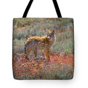 Teton Coyote Tote Bag