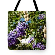 Texas Mountain Laurel Sophora Flowers And Mescal Beans Tote Bag