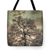 Texas Oak Tree Tote Bag