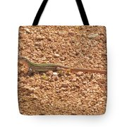 Texas Striped And Spotted Whiptail Lizard Tote Bag