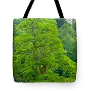 The Beauty Of A Tree Tote Bag