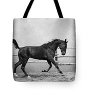 The Beauty Of The Horse Tote Bag