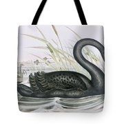 The Black Swan Tote Bag by John Gould
