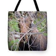 The Calf Tote Bag