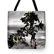 The Catus Tree Siesta Key Florida Tote Bag