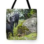 The Cheeky Goat Tote Bag