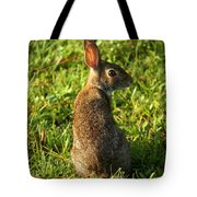 The Curious Rabbit Tote Bag