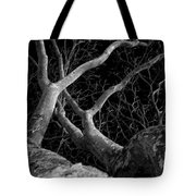 The Dark And The Tree 2 Tote Bag by Fabio Giannini