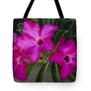 The Desert Rose  Tote Bag