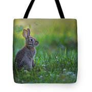 The Eastern Cottontail Tote Bag