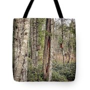 Birdhouse Neighbourhood Hamilton Marsh  Tote Bag