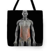 The External Oblique Muscles Tote Bag