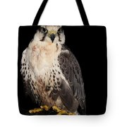 The Falcon Tote Bag