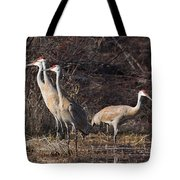The Gathering...sandhill Cranes Tote Bag