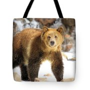The Grizzly Strut Tote Bag