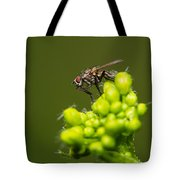 The Hidden World Of Khaki Square - Featured 3 Tote Bag