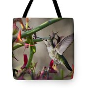 The Hummingbird And The Slipper Plant  Tote Bag