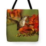 The Hummingbird Turns   Tote Bag