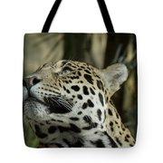 The Jaguar's Gaze Tote Bag