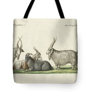 The Kashmir Goats Introduced In France Tote Bag