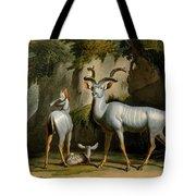 A Kudus Or Kudu Tote Bag