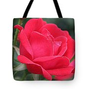 The Last Rose Of Spring Tote Bag