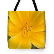 The Lily From Kentucky Tote Bag