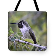 The Little Costa Tote Bag