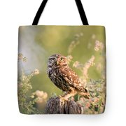 The Little Owl Tote Bag