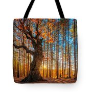 The Lord Of The Trees Tote Bag by Evgeni Dinev