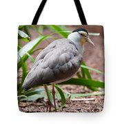 The Masked Lapwing Vanellus Miles Previously Known As The Mask Tote Bag