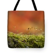 The Miniature World Of Moss  Tote Bag by Anne Gilbert