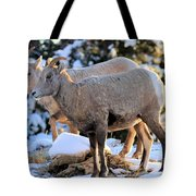 The Morning Stroll Tote Bag