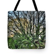 The Mossy Creatures Of The  Old Beech Forest 8 Tote Bag