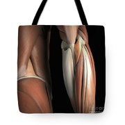 The Muscles Of The Elbow Rear Tote Bag
