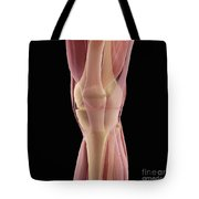 The Muscles Of The Knee Tote Bag