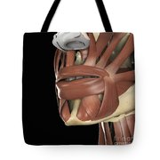 The Muscles Of The Mouth Tote Bag