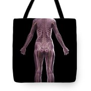 The Nervous And Skeletal Systems Female Tote Bag