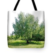 The Old Birch Tree Tote Bag