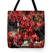 The Old Shed Tote Bag by John Edwards