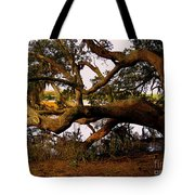 The Old Tree At The Ashley River In Charleston Tote Bag by Susanne Van Hulst