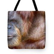 The Orangutan Album  Tote Bag