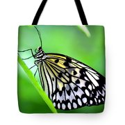 The Paper Kite Or Rice Paper Or Large Tree Nymph Butterfly Also Known As Idea Leuconoe Tote Bag