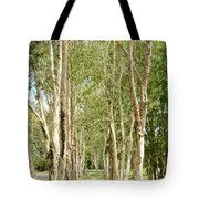 The Path Between The Trees Tote Bag