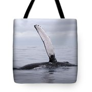 The Pectoral Fin Of A Humpback Tote Bag