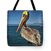 The Pelican Of Oceanside Pier Tote Bag
