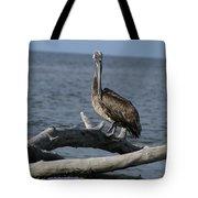 The Pelican Pose Tote Bag