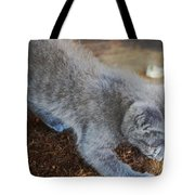 The Playful Kitten Tote Bag