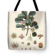 The Rose Coloured Clusia Tote Bag